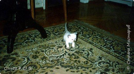 Котик Максик  фото 12