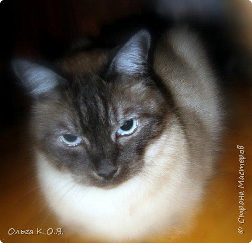 Котик Максик  фото 13