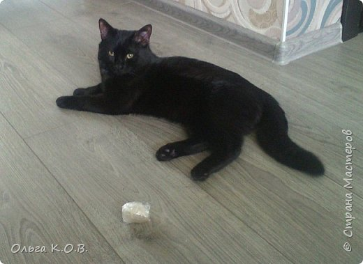 Котик Максик  фото 4
