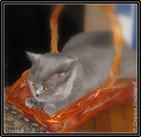 Котик Максик  фото 7