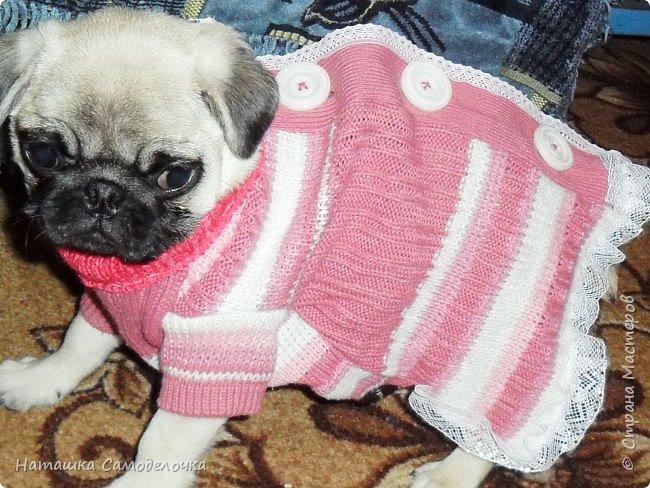 Привет СМ,эту маленькую девочку зовут Нюша,и она замерзла,холодно у нас(снег уж)ей всего 3 мес.,вот сделаны прививки и пора бы погулять,был и сделан заказ на пару теплых кофточек,я уже говорила вроде,шью из того ,что есть и продаю,оочень дешево))).ПРИЯТНОГО ПРОСМОТРА!!! фото 7
