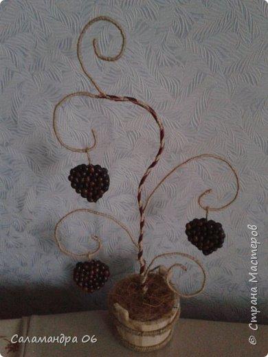 у меня выросло новое деревце фото 2