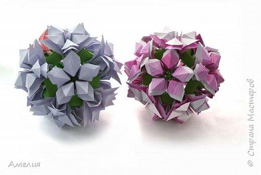 Цветы Jania