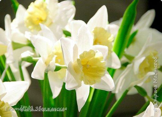 Нарциссы из холодного фарфора. фото 6