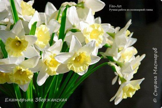 Нарциссы из холодного фарфора. фото 7