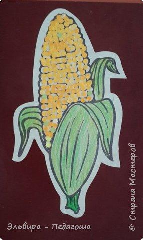 А сегодня мои первоклашки собирали кукурузу. фото 3