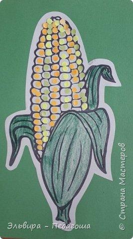 А сегодня мои первоклашки собирали кукурузу. фото 2