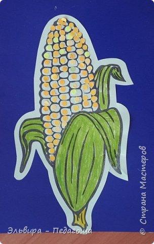 А сегодня мои первоклашки собирали кукурузу. фото 5