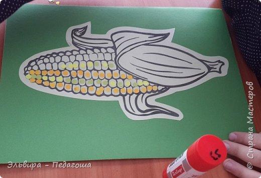 А сегодня мои первоклашки собирали кукурузу. фото 8
