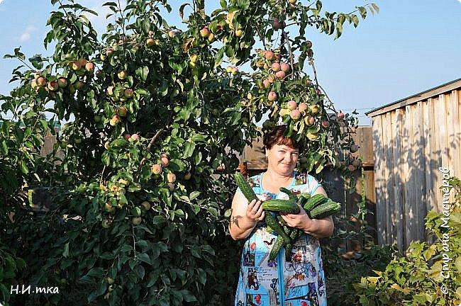 """Посадила нынче тыквы разных сортов.  Как вам такие шляпки? Выбирайте по размеру. Сорт """"Турецкий тюрбан"""". фото 11"""