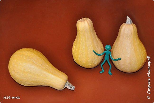 """Посадила нынче тыквы разных сортов.  Как вам такие шляпки? Выбирайте по размеру. Сорт """"Турецкий тюрбан"""". фото 2"""