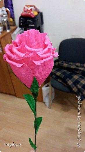 Розовые розы! фото 5