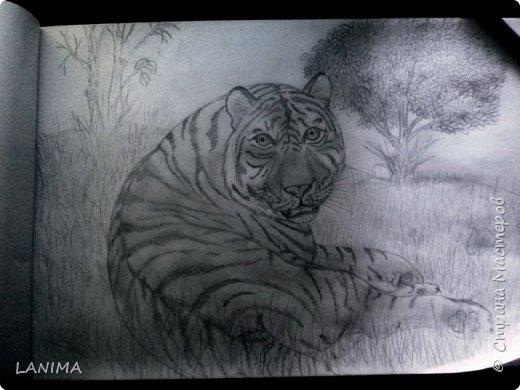 тигры милуются фото 3