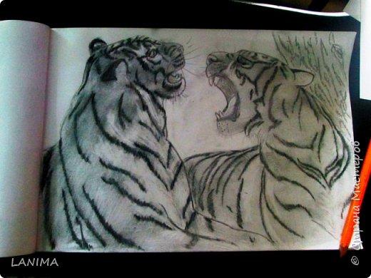 тигры милуются фото 1