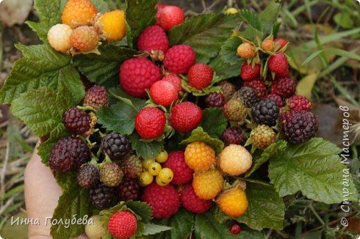 Девочки,привет! Налепила вот таких ягодок, часть из них делала на заказ и добавила разнообразия,заодно немного пофоткала процесс тонировки. фото 2