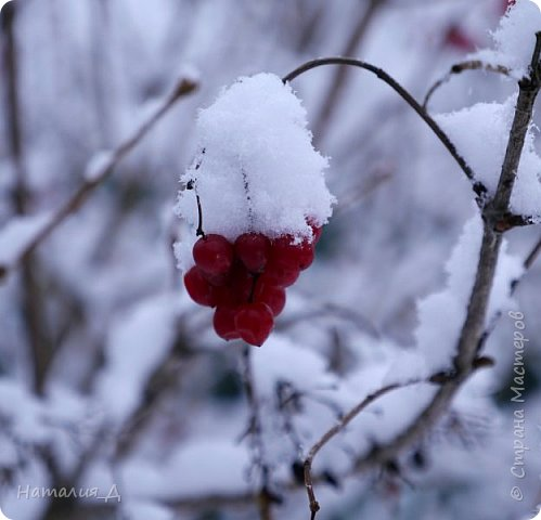 Доброго всем времени суток! Вот и пришло это чудо - СНЕГОПАД..... Первый настоящий, как в сказке, тихо шуршащий по куртке и воздушной нежностью укутывающий засыпающую природу....  Я очарована им с детства...... Эта любовь - любовь к снегопаду - пронесена через теплые зимы, похожие на осень, согрета в мечтах о скорой встрече и......  вот, долгожданная встреча состоялась - и я пытаюсь запечатлеть эту любовь в своих фотографиях..... как получается - судить Вам, жители Страны Мастеров... фото 5