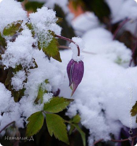 Доброго всем времени суток! Вот и пришло это чудо - СНЕГОПАД..... Первый настоящий, как в сказке, тихо шуршащий по куртке и воздушной нежностью укутывающий засыпающую природу....  Я очарована им с детства...... Эта любовь - любовь к снегопаду - пронесена через теплые зимы, похожие на осень, согрета в мечтах о скорой встрече и......  вот, долгожданная встреча состоялась - и я пытаюсь запечатлеть эту любовь в своих фотографиях..... как получается - судить Вам, жители Страны Мастеров... фото 3
