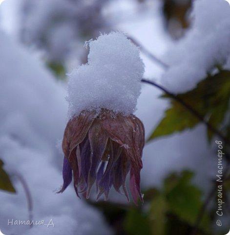 Доброго всем времени суток! Вот и пришло это чудо - СНЕГОПАД..... Первый настоящий, как в сказке, тихо шуршащий по куртке и воздушной нежностью укутывающий засыпающую природу....  Я очарована им с детства...... Эта любовь - любовь к снегопаду - пронесена через теплые зимы, похожие на осень, согрета в мечтах о скорой встрече и......  вот, долгожданная встреча состоялась - и я пытаюсь запечатлеть эту любовь в своих фотографиях..... как получается - судить Вам, жители Страны Мастеров... фото 4