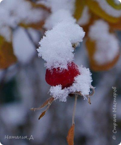 Доброго всем времени суток! Вот и пришло это чудо - СНЕГОПАД..... Первый настоящий, как в сказке, тихо шуршащий по куртке и воздушной нежностью укутывающий засыпающую природу....  Я очарована им с детства...... Эта любовь - любовь к снегопаду - пронесена через теплые зимы, похожие на осень, согрета в мечтах о скорой встрече и......  вот, долгожданная встреча состоялась - и я пытаюсь запечатлеть эту любовь в своих фотографиях..... как получается - судить Вам, жители Страны Мастеров... фото 6