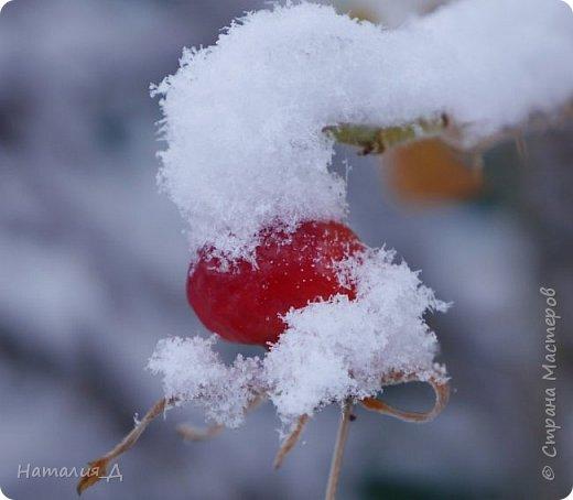 Доброго всем времени суток! Вот и пришло это чудо - СНЕГОПАД..... Первый настоящий, как в сказке, тихо шуршащий по куртке и воздушной нежностью укутывающий засыпающую природу....  Я очарована им с детства...... Эта любовь - любовь к снегопаду - пронесена через теплые зимы, похожие на осень, согрета в мечтах о скорой встрече и......  вот, долгожданная встреча состоялась - и я пытаюсь запечатлеть эту любовь в своих фотографиях..... как получается - судить Вам, жители Страны Мастеров... фото 1
