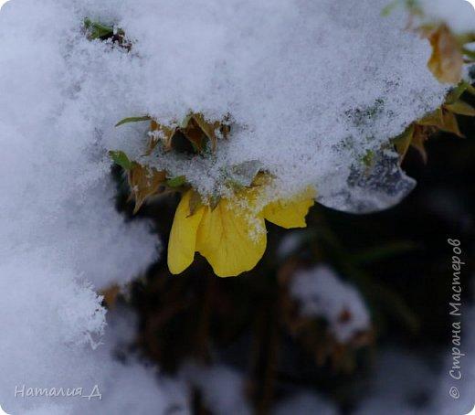 Доброго всем времени суток! Вот и пришло это чудо - СНЕГОПАД..... Первый настоящий, как в сказке, тихо шуршащий по куртке и воздушной нежностью укутывающий засыпающую природу....  Я очарована им с детства...... Эта любовь - любовь к снегопаду - пронесена через теплые зимы, похожие на осень, согрета в мечтах о скорой встрече и......  вот, долгожданная встреча состоялась - и я пытаюсь запечатлеть эту любовь в своих фотографиях..... как получается - судить Вам, жители Страны Мастеров... фото 8