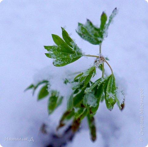 Доброго всем времени суток! Вот и пришло это чудо - СНЕГОПАД..... Первый настоящий, как в сказке, тихо шуршащий по куртке и воздушной нежностью укутывающий засыпающую природу....  Я очарована им с детства...... Эта любовь - любовь к снегопаду - пронесена через теплые зимы, похожие на осень, согрета в мечтах о скорой встрече и......  вот, долгожданная встреча состоялась - и я пытаюсь запечатлеть эту любовь в своих фотографиях..... как получается - судить Вам, жители Страны Мастеров... фото 9