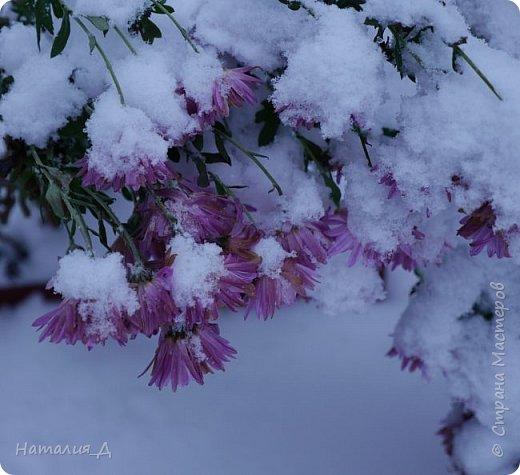 Доброго всем времени суток! Вот и пришло это чудо - СНЕГОПАД..... Первый настоящий, как в сказке, тихо шуршащий по куртке и воздушной нежностью укутывающий засыпающую природу....  Я очарована им с детства...... Эта любовь - любовь к снегопаду - пронесена через теплые зимы, похожие на осень, согрета в мечтах о скорой встрече и......  вот, долгожданная встреча состоялась - и я пытаюсь запечатлеть эту любовь в своих фотографиях..... как получается - судить Вам, жители Страны Мастеров... фото 11