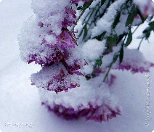 Доброго всем времени суток! Вот и пришло это чудо - СНЕГОПАД..... Первый настоящий, как в сказке, тихо шуршащий по куртке и воздушной нежностью укутывающий засыпающую природу....  Я очарована им с детства...... Эта любовь - любовь к снегопаду - пронесена через теплые зимы, похожие на осень, согрета в мечтах о скорой встрече и......  вот, долгожданная встреча состоялась - и я пытаюсь запечатлеть эту любовь в своих фотографиях..... как получается - судить Вам, жители Страны Мастеров... фото 12