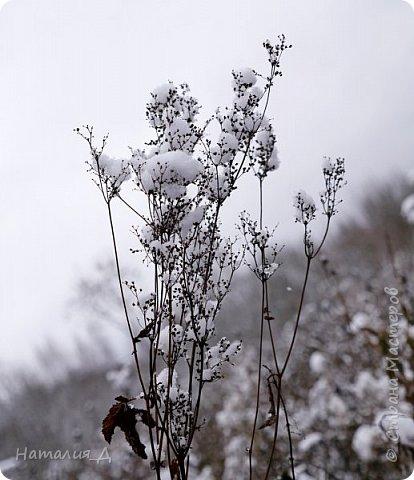 Доброго всем времени суток! Вот и пришло это чудо - СНЕГОПАД..... Первый настоящий, как в сказке, тихо шуршащий по куртке и воздушной нежностью укутывающий засыпающую природу....  Я очарована им с детства...... Эта любовь - любовь к снегопаду - пронесена через теплые зимы, похожие на осень, согрета в мечтах о скорой встрече и......  вот, долгожданная встреча состоялась - и я пытаюсь запечатлеть эту любовь в своих фотографиях..... как получается - судить Вам, жители Страны Мастеров... фото 13