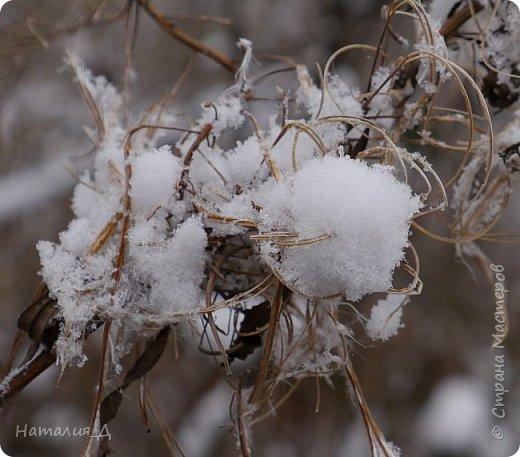 Доброго всем времени суток! Вот и пришло это чудо - СНЕГОПАД..... Первый настоящий, как в сказке, тихо шуршащий по куртке и воздушной нежностью укутывающий засыпающую природу....  Я очарована им с детства...... Эта любовь - любовь к снегопаду - пронесена через теплые зимы, похожие на осень, согрета в мечтах о скорой встрече и......  вот, долгожданная встреча состоялась - и я пытаюсь запечатлеть эту любовь в своих фотографиях..... как получается - судить Вам, жители Страны Мастеров... фото 15