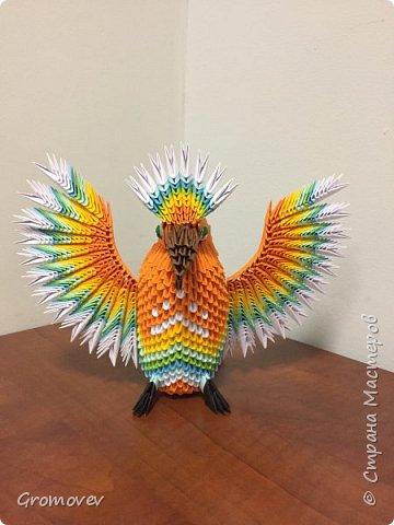 Попугаи. фото 124