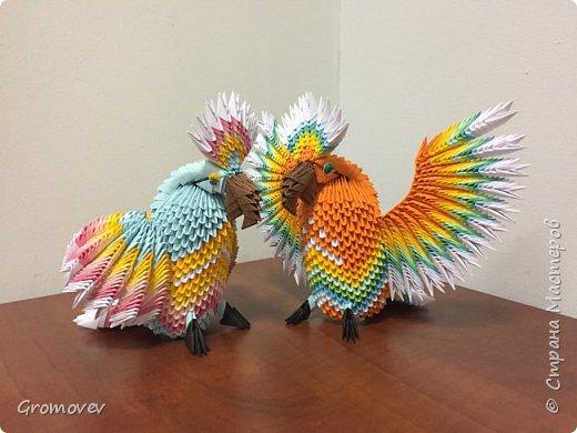 Попугаи. фото 2