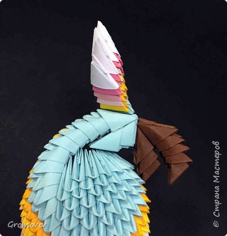 Попугаи. фото 98