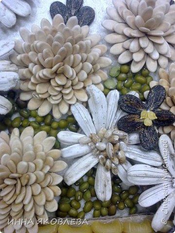 На создание нас вдохновила работа Олечки Симоновой. Конечно, мы использовали другие материалы, те, что были под рукой. -макароны -семечки тыквы -семена подсолнуха -маш -семечки дыни -семечки арбуза -семечки перца -лля серединок цветов кукурузная крупа и перловка фото 6