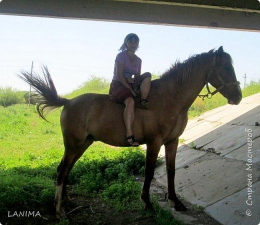 хочу показать вам моих любимцев,это лошади, мои собственные и  питомцы в конюшне конной полиции. это Честер,он будёновской породы,очень своенравный и характерный. без седла паинька а вот под седлом монстр. фото 1