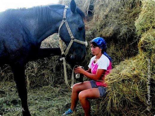 хочу показать вам моих любимцев,это лошади, мои собственные и  питомцы в конюшне конной полиции. это Честер,он будёновской породы,очень своенравный и характерный. без седла паинька а вот под седлом монстр. фото 3
