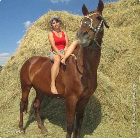 хочу показать вам моих любимцев,это лошади, мои собственные и  питомцы в конюшне конной полиции. это Честер,он будёновской породы,очень своенравный и характерный. без седла паинька а вот под седлом монстр. фото 4
