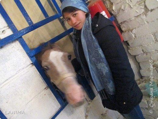 хочу показать вам моих любимцев,это лошади, мои собственные и  питомцы в конюшне конной полиции. это Честер,он будёновской породы,очень своенравный и характерный. без седла паинька а вот под седлом монстр. фото 10