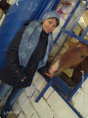 хочу показать вам моих любимцев,это лошади, мои собственные и  питомцы в конюшне конной полиции. это Честер,он будёновской породы,очень своенравный и характерный. без седла паинька а вот под седлом монстр. фото 11