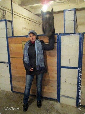 хочу показать вам моих любимцев,это лошади, мои собственные и  питомцы в конюшне конной полиции. это Честер,он будёновской породы,очень своенравный и характерный. без седла паинька а вот под седлом монстр. фото 14