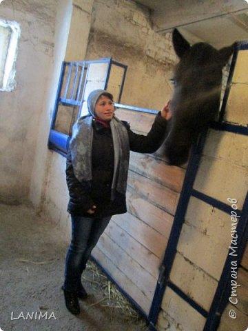 хочу показать вам моих любимцев,это лошади, мои собственные и  питомцы в конюшне конной полиции. это Честер,он будёновской породы,очень своенравный и характерный. без седла паинька а вот под седлом монстр. фото 15
