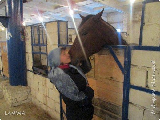 хочу показать вам моих любимцев,это лошади, мои собственные и  питомцы в конюшне конной полиции. это Честер,он будёновской породы,очень своенравный и характерный. без седла паинька а вот под седлом монстр. фото 16