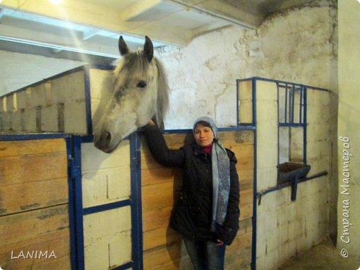 хочу показать вам моих любимцев,это лошади, мои собственные и  питомцы в конюшне конной полиции. это Честер,он будёновской породы,очень своенравный и характерный. без седла паинька а вот под седлом монстр. фото 17