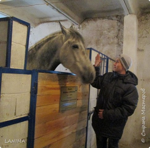 хочу показать вам моих любимцев,это лошади, мои собственные и  питомцы в конюшне конной полиции. это Честер,он будёновской породы,очень своенравный и характерный. без седла паинька а вот под седлом монстр. фото 18