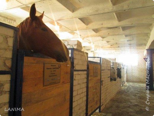 хочу показать вам моих любимцев,это лошади, мои собственные и  питомцы в конюшне конной полиции. это Честер,он будёновской породы,очень своенравный и характерный. без седла паинька а вот под седлом монстр. фото 19