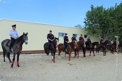 хочу показать вам моих любимцев,это лошади, мои собственные и  питомцы в конюшне конной полиции. это Честер,он будёновской породы,очень своенравный и характерный. без седла паинька а вот под седлом монстр. фото 21