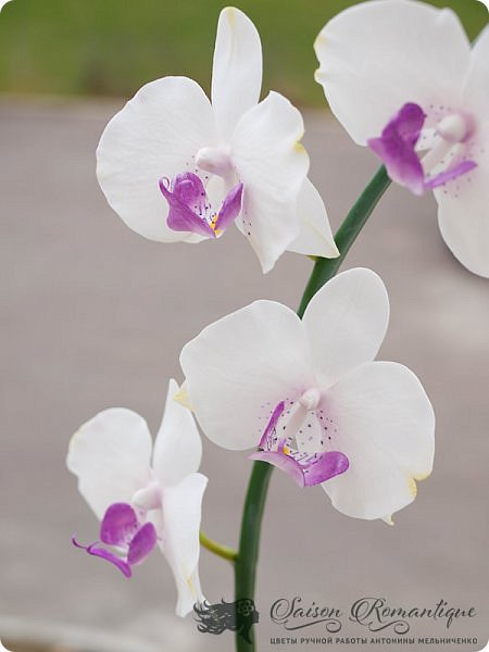 Всем доброго времени суток! Продолжая лепить орхидеи, продолжаю их потихоньку улучшать. Вот недавняя орхидейка, сфотографированная на балкончике моего нового места жительства. Собственно, именно поэтому я долго и не писала ничего, так как у нас летом был ремонт и долгий переезд в новый дом с прекрасным видом на пруд.  фото 2