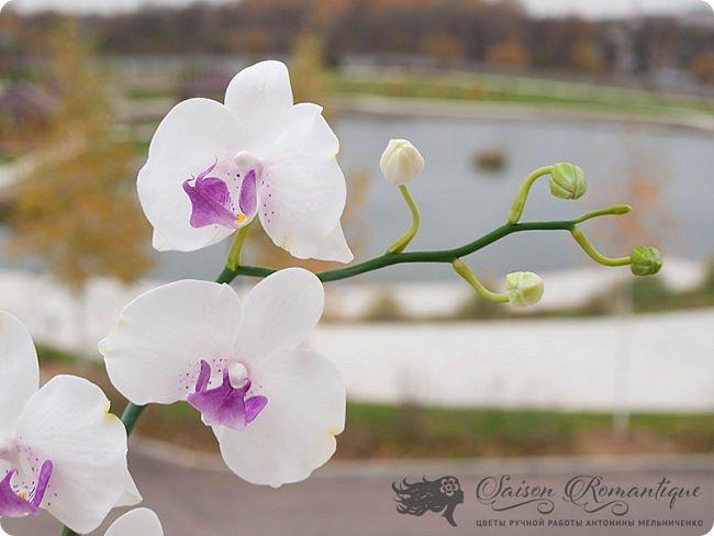 Всем доброго времени суток! Продолжая лепить орхидеи, продолжаю их потихоньку улучшать. Вот недавняя орхидейка, сфотографированная на балкончике моего нового места жительства. Собственно, именно поэтому я долго и не писала ничего, так как у нас летом был ремонт и долгий переезд в новый дом с прекрасным видом на пруд.  фото 3