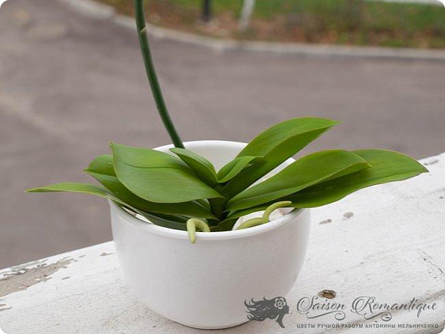 Всем доброго времени суток! Продолжая лепить орхидеи, продолжаю их потихоньку улучшать. Вот недавняя орхидейка, сфотографированная на балкончике моего нового места жительства. Собственно, именно поэтому я долго и не писала ничего, так как у нас летом был ремонт и долгий переезд в новый дом с прекрасным видом на пруд.  фото 4