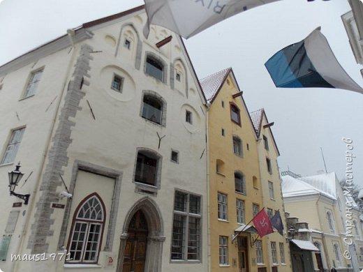 На осенних каникулах мы с мужем решили отправиться в  горячо любимый нами Таллин. Любовь эта была с первого взгляда и продолжается уже три года. Уезжали мы из Владимира со снегом. А Таллин встретил нас осенью. Желтые березы, зеленые каштаны  и липы. По дороге в наш отель мы фотографировали. фото 15